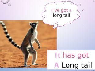 It has got A Long tail I've got a long tail