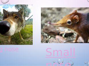 Big nose Small nose