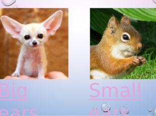 Big ears Small ears