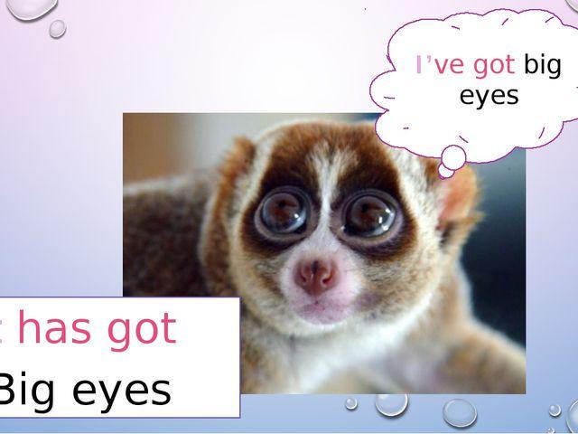 It has got Big eyes I've got big eyes
