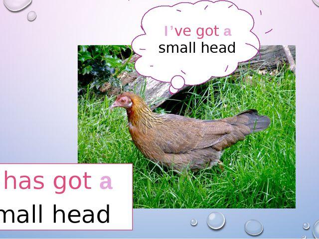 I've got a small head It has got a Small head