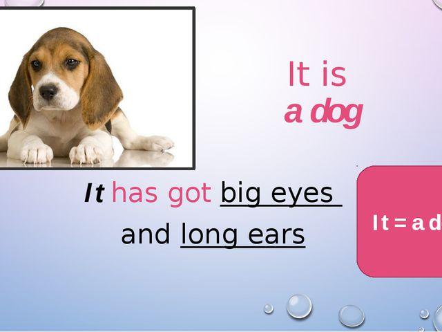It is a dog It has got big eyes and long ears It = a dog