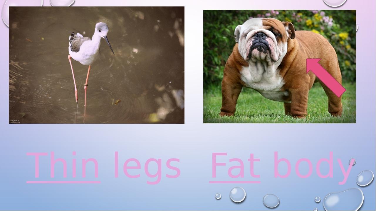 Thin legs Fat body
