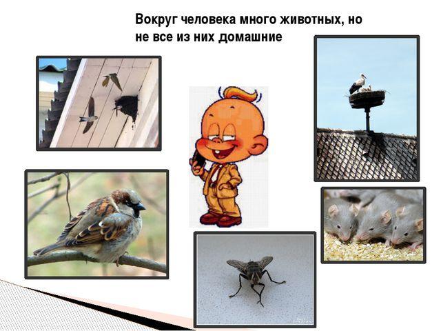 Вокруг человека много животных, но не все из них домашние