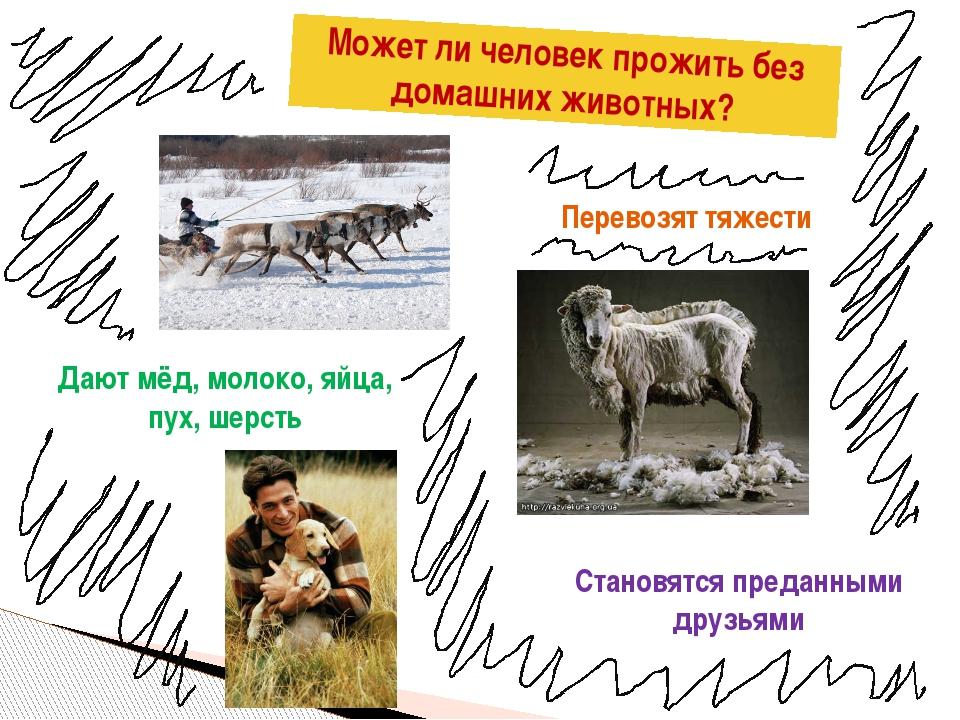 Может ли человек прожить без домашних животных? Перевозят тяжести Дают мёд, м...