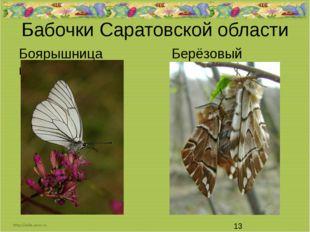 Бабочки Саратовской области Боярышница Берёзовый шелкопряд