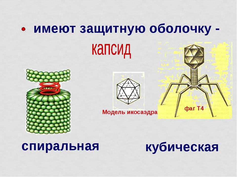 Модель икосаэдра фаг Т4 имеют защитную оболочку - спиральная кубическая