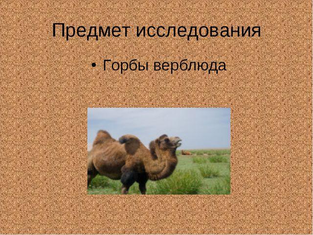 Предмет исследования Горбы верблюда