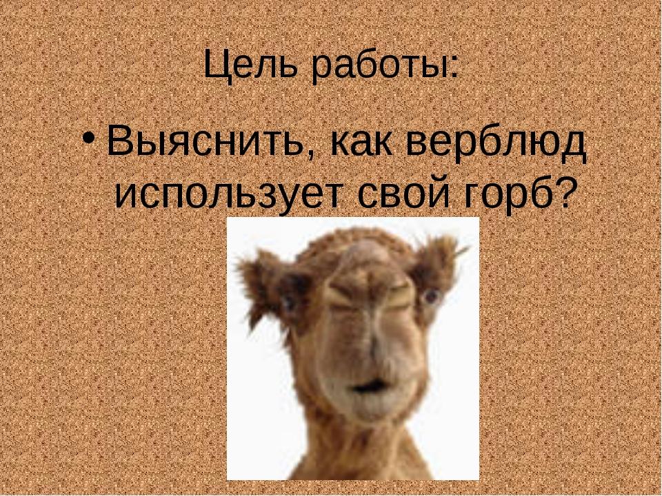 Цель работы: Выяснить, как верблюд использует свой горб?