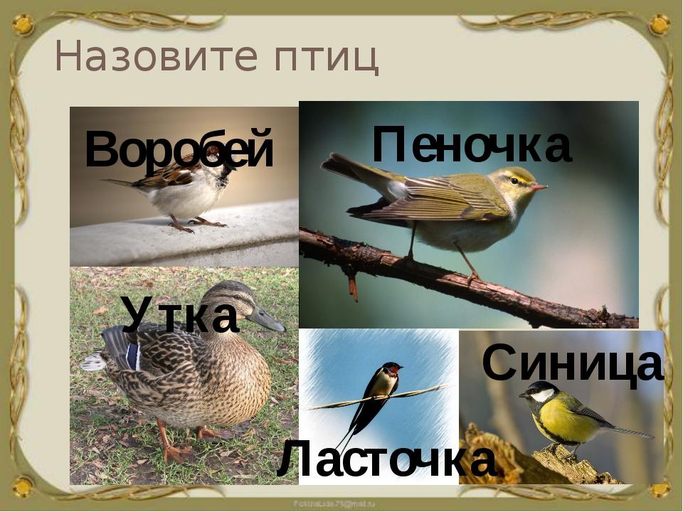 Назовите птиц Воробей Утка Пеночка Ласточка Синица