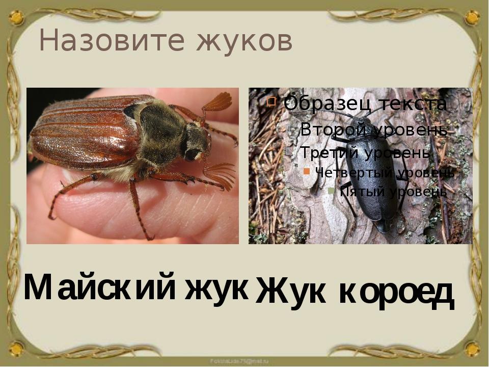 Назовите жуков Жук короед Майский жук
