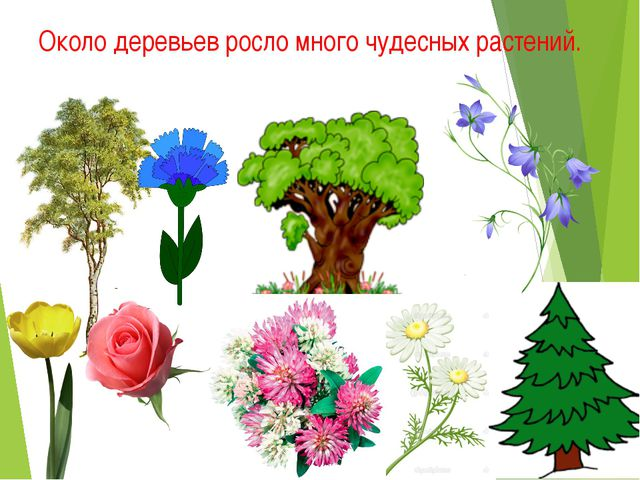 Около деревьев росло много чудесных растений.