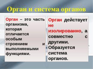 Орган и система органов Орган – это часть организма, которая отличается особы