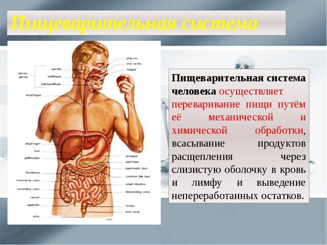 Пищеварительная система Пищеварительная система человекаосуществляет перевар...