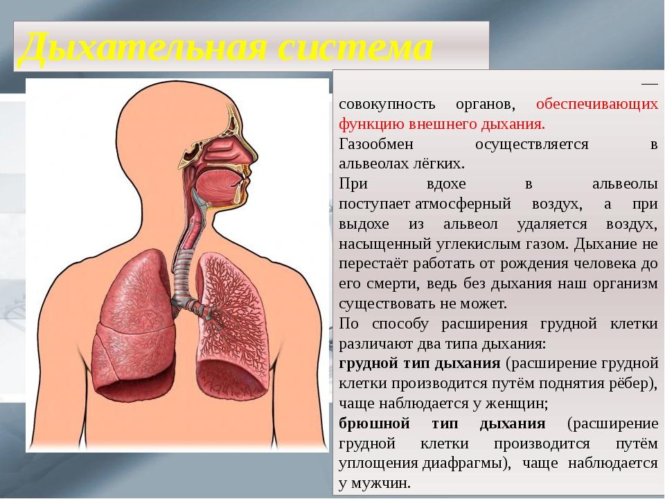 Дыхательная система Дыха́тельная систе́ма челове́ка— совокупность органов, о...