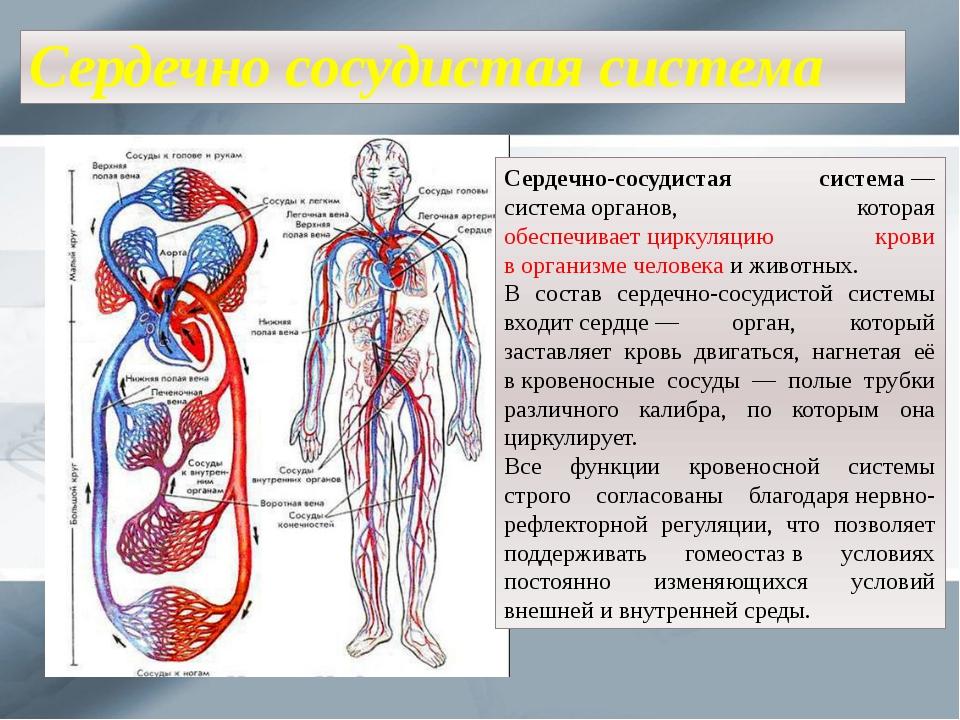 Сердечно сосудистая система Сердечно-сосудистая система— системаорганов, ко...