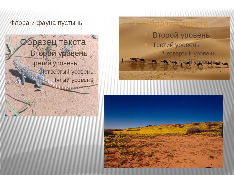 Флора и фауна пустынь