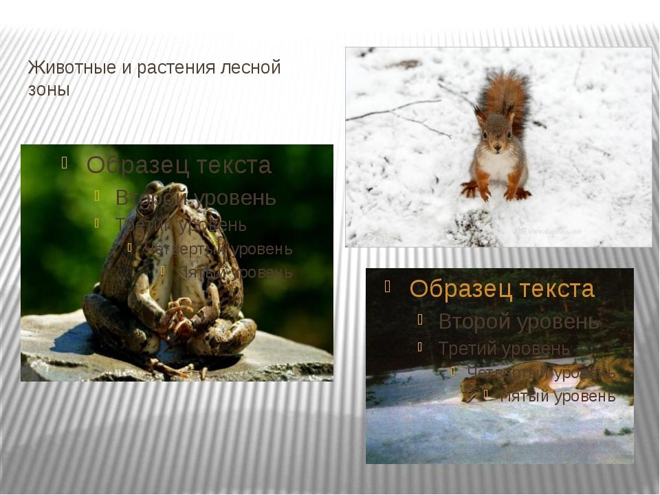 Животные и растения лесной зоны