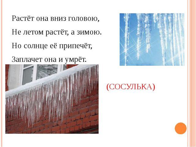 Растёт она вниз головою, Не летом растёт, а зимою. Но солнце её припечёт, За...