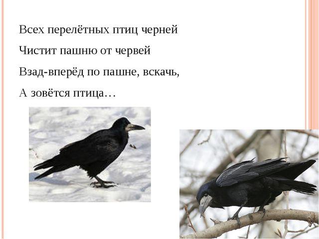 Всех перелётных птиц черней Чистит пашню от червей Взад-вперёд по пашне, вск...