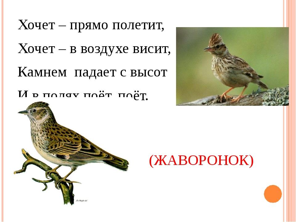Хочет – прямо полетит, Хочет – в воздухе висит, Камнем падает с высот И в по...
