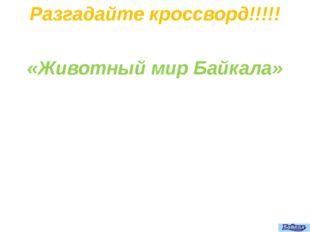 Разгадайте кроссворд!!!!! «Животный мир Байкала»