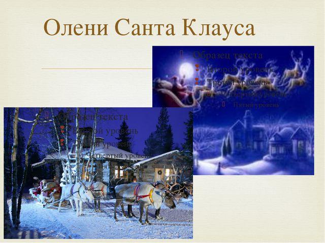 Олени Санта Клауса 