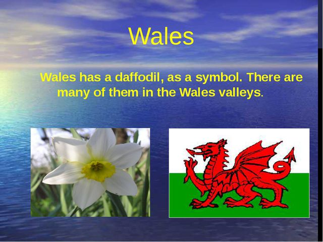 Wales has a daffodil, as a symbol. There are many of them in the Wales valley...
