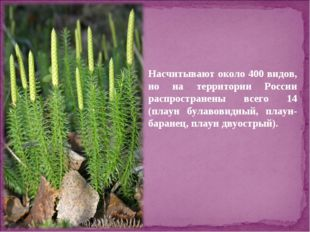 Насчитывают около 400 видов, но на территории России распространены всего 14
