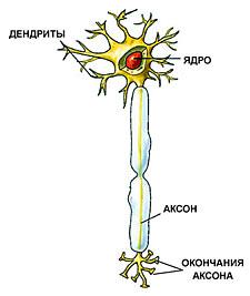http://nkj.ru/upload/iblock/9bc83bd4764fbcd663556ddc652d4c67.jpg