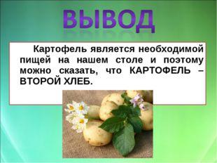 Картофель является необходимой пищей на нашем столе и поэтому можно сказать