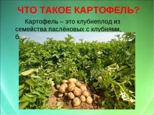 ЧТО ТАКОЕ КАРТОФЕЛЬ? Картофель – это клубнеплод из семейства паслёновых с к