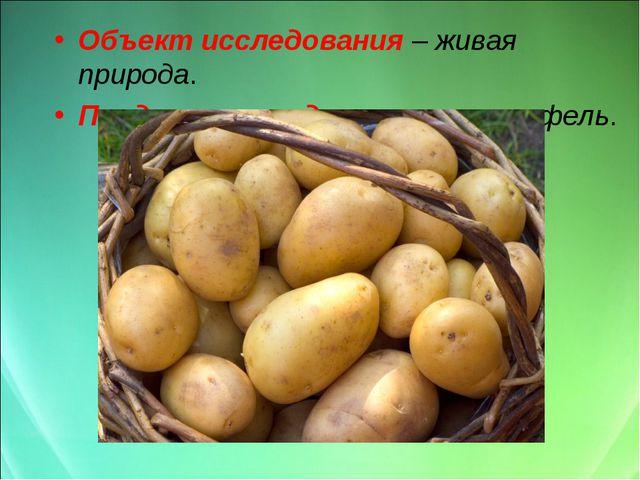 Объект исследования – живая природа. Предмет исследования – картофель.