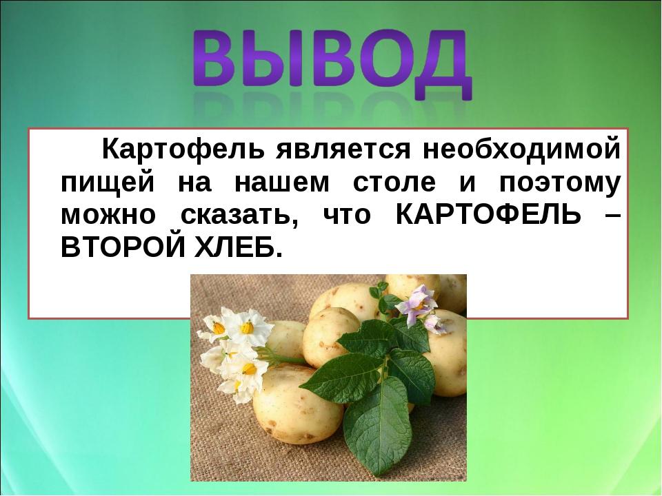Картофель является необходимой пищей на нашем столе и поэтому можно сказать...