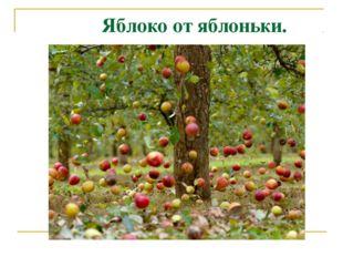 Яблоко от яблоньки.