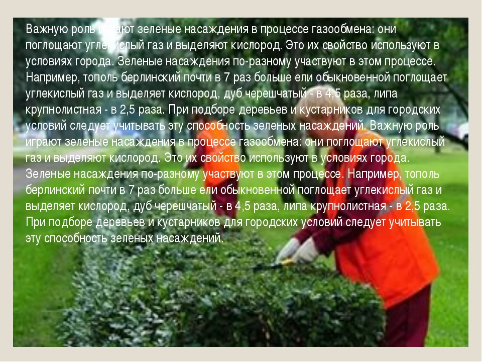 Важную роль играют зеленые насаждения в процессе газообмена: они поглощают уг...