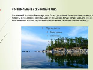 Растительный и животный мир. Растительный и животный мир озера очень богат, з