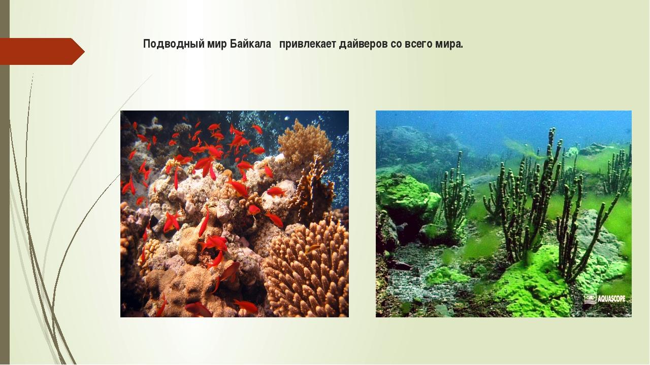 Подводный мир Байкала привлекает дайверов со всего мира.