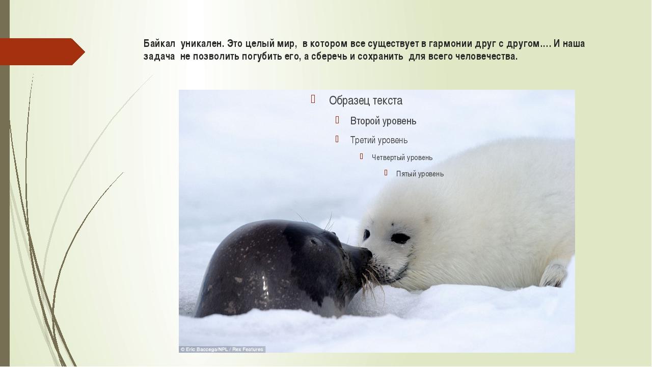 Байкал уникален. Это целый мир, в котором все существует в гармонии друг с др...