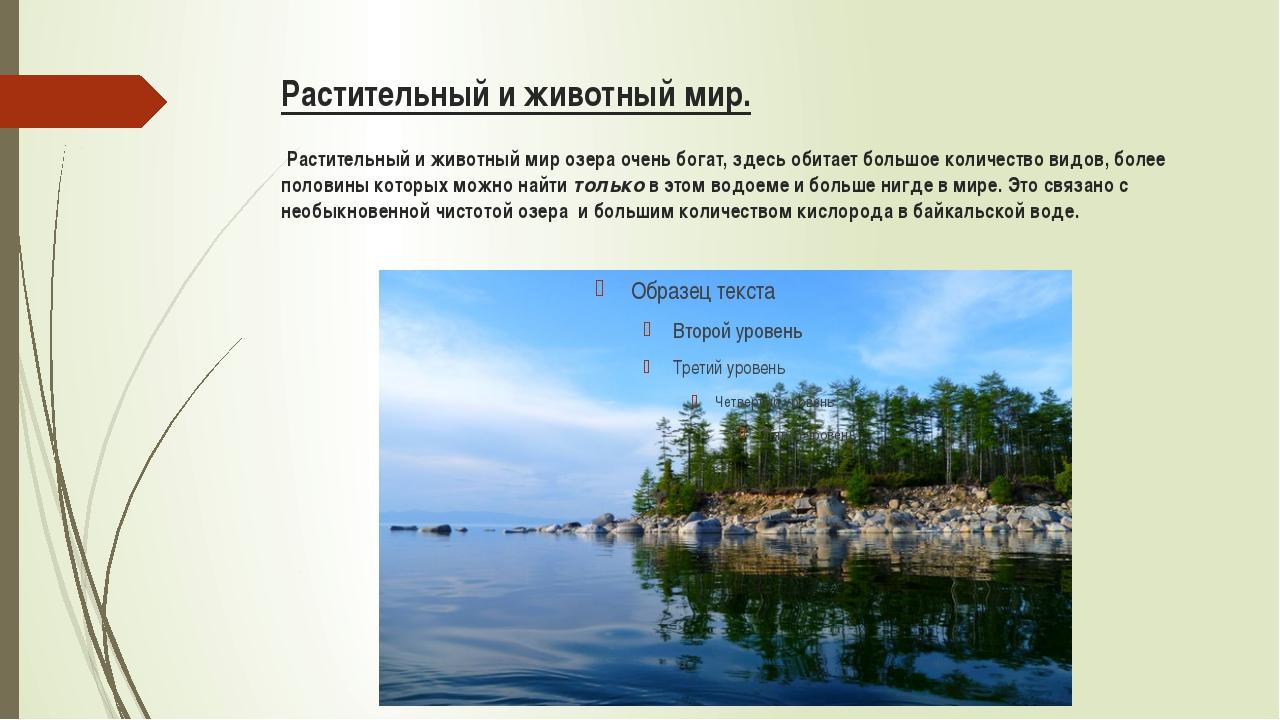 Растительный и животный мир. Растительный и животный мир озера очень богат, з...