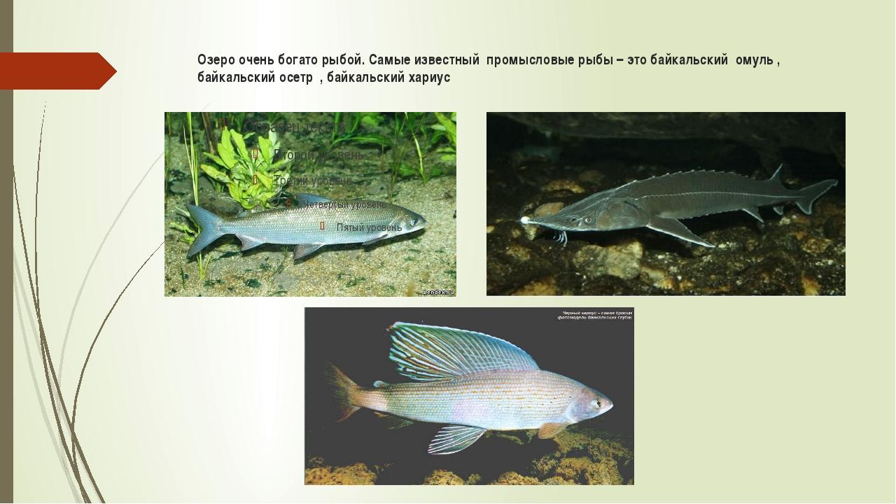 Озеро очень богато рыбой. Самые известный промысловые рыбы – это байкальский...