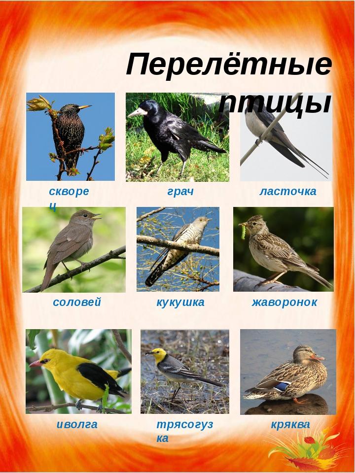 Месяцев мальчику, перелетные птицы картинки с надписью