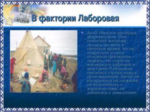 В фактории Лаборовая Анна Неркаги занялась фермерством. Она помогала жителям