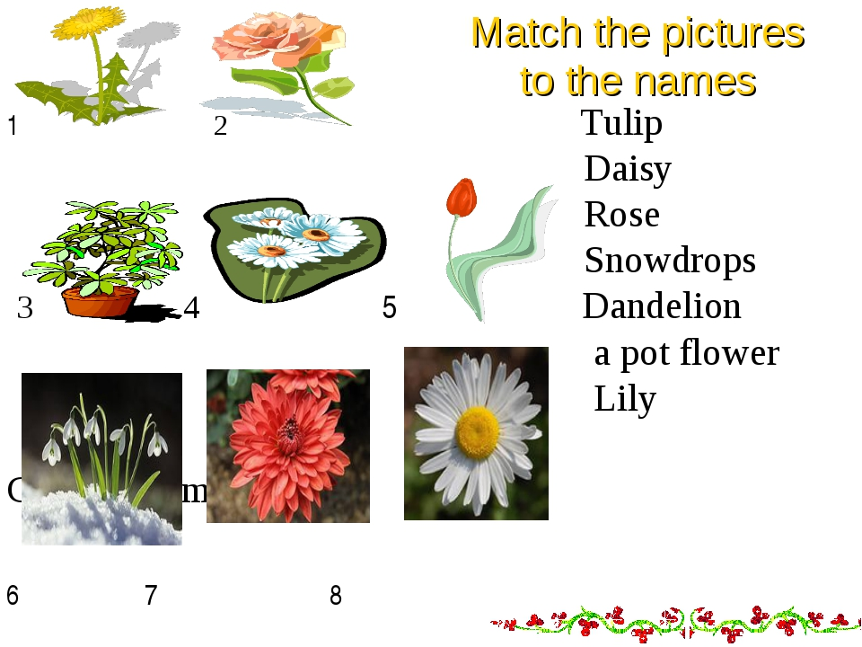 Match the pictures to the names 1 2 Tulip Daisy Rose Snowdrops 3 4 5 Dandeli...