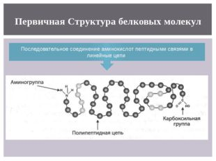 Первичная Структура белковых молекул Последовательное соединение аминокислот