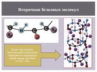 Вторичная белковых молекул Имеет вид спирали, возникающей в результате образо