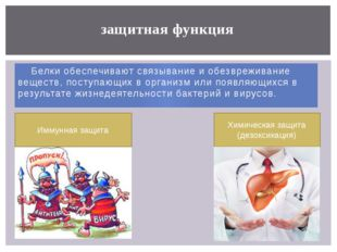 Белки обеспечивают связывание и обезвреживание веществ, поступающих в органи