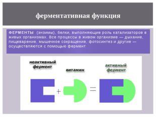 ФЕРМЕНТЫ (энзимы), белки, выполняющиероль катализаторов в живых организмах.