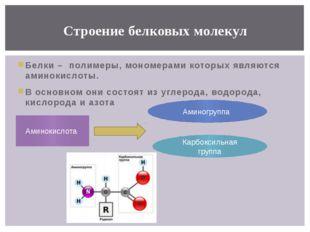 Белки – полимеры, мономерами которых являются аминокислоты. В основном они со