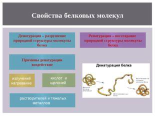 Свойства белковых молекул Денатурация – разрушение природной структуры молеку